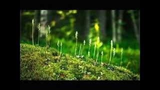 Мероприятия по охране леса