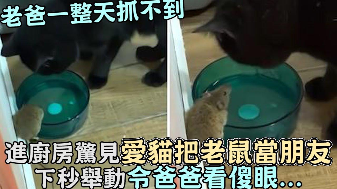 老爸一整天抓不到,進廚房驚見愛貓把老鼠當朋友,下秒舉動令爸爸看傻眼