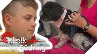 Plötzlich Angst vor Hunden! Wurde Paul (10) gebissen?   Klinik am Südring   SAT.1