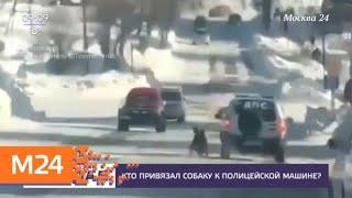 Кто привязал собаку к полицейской машине - Москва 24
