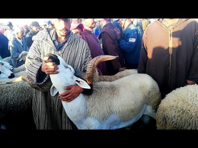 اليوم من قلب سوق بن جرير اقليم رحامنة المليح موجود و الثمن طايح و المليح ب 6500 درهم