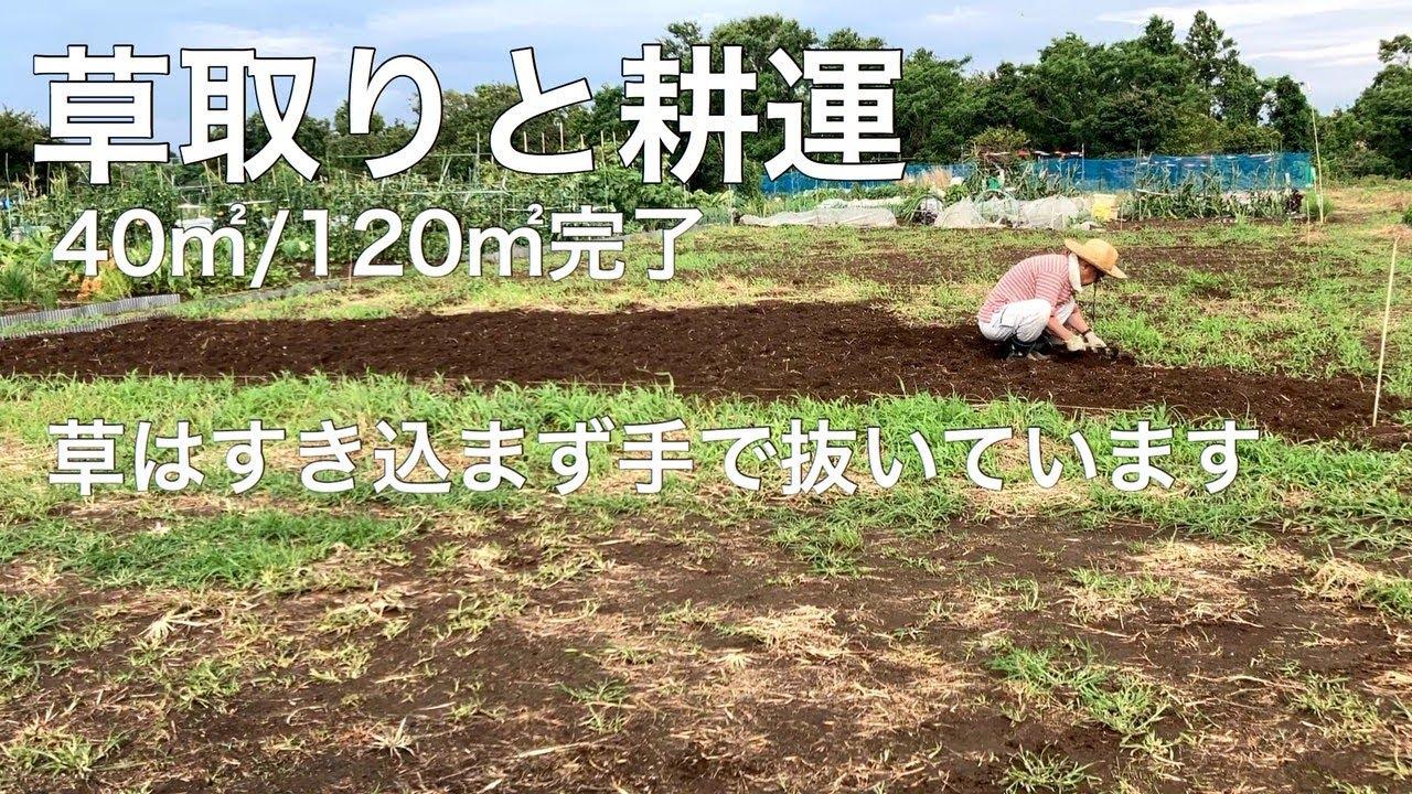 新しい畑の草取りと耕運 草取りは丁寧に手で抜いて先日購入した中古の「プチな」で耕運 機械は楽です