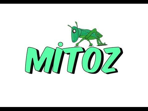 MİTOZ