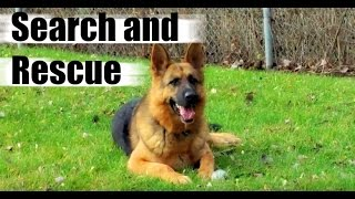 How do Police Train Dogs like German Shepherd Edge for Drug Search and Rescue?