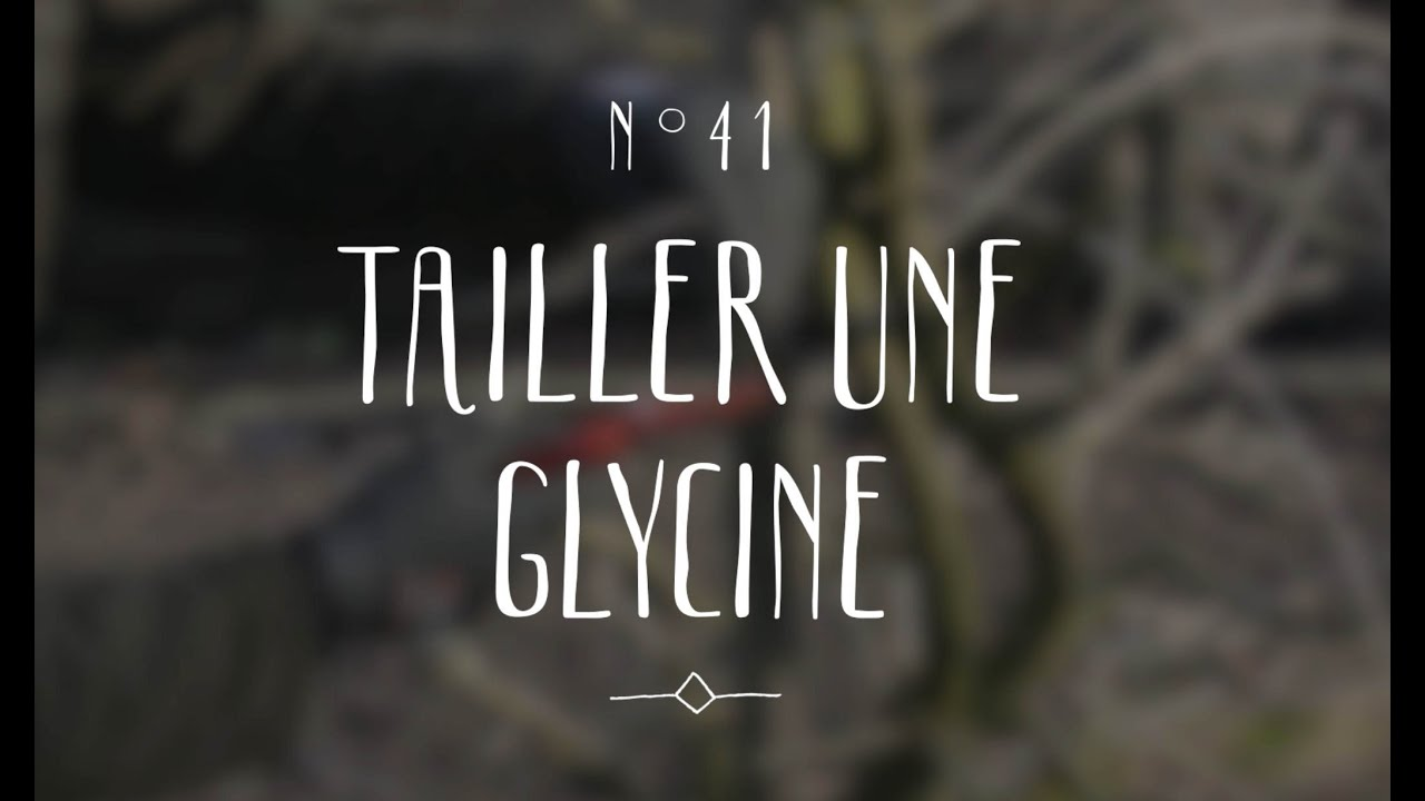 tailler une glycine youtube