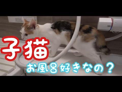 子猫たちはお風呂が意外と好き⁈ The kittens like bathing unexpectedly