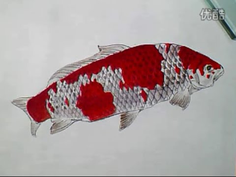 Fish painting With Chinese Ink & Chinese Watercolor