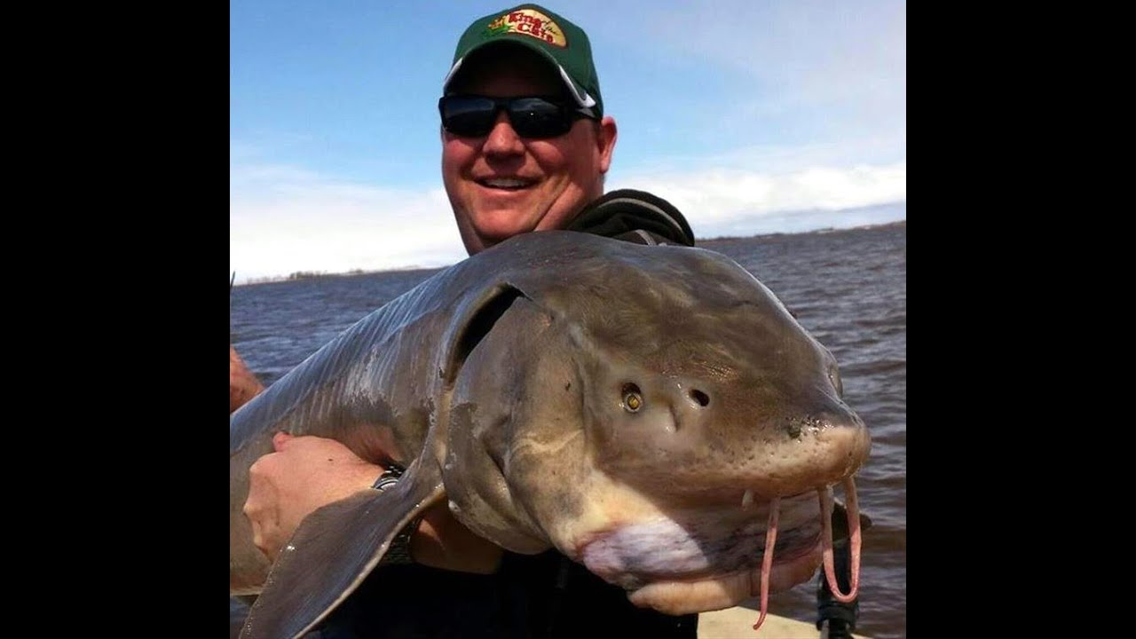 sturgeon lake jewish dating site Rare fish caught with a sausage: 'royal' sturgeon hooked  boyfriend' they had been dating since last  friend on a jewish podcast sobbing just two.