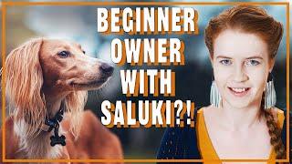 Is saluki good for novice owner?
