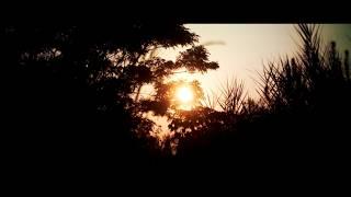 月光微韻 No.17 「月の夜の 薄翅かげろう 白芥子の 空に舞えよ」