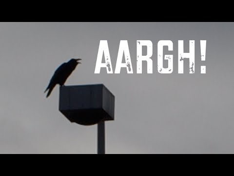QUOTH THE RAVEN, AARGH! - [Living in Alaska 48]