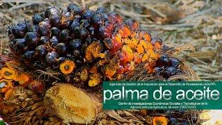 AGI-DP  PALMA DE ACEITE