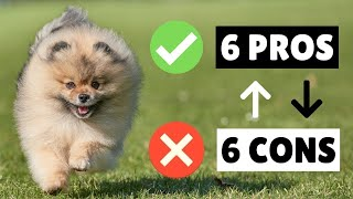 Pomeranian PROS And CONS ✔❌ The GOOD And The BAD