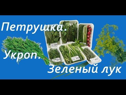 полезные свойства зелени - Укроп Петрушка зеленый лук