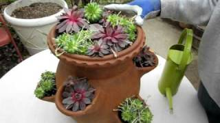How To Plant A Succulent Strawberry Pot