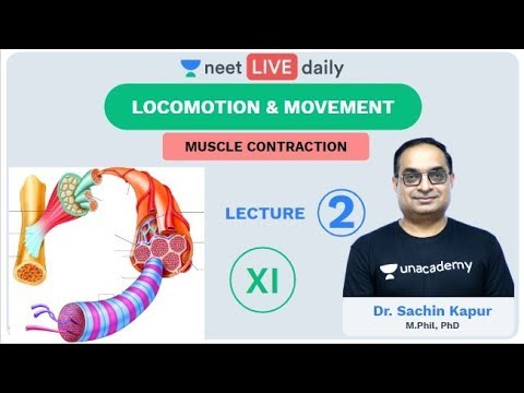 Locomotion & Movement - Lecture 2 | Unacademy NEET | LIVE DAILY | NEET Biology | Dr. Sachin Kapur