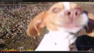 Puppy Breaks Camera Video Pocket Beagle Lol Cute Funny