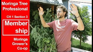 Moringa Tree Professional   Ch 1- Membership (3/7)
