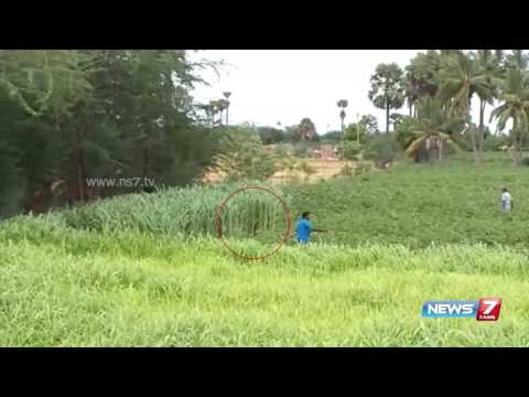 Bear enters farmland at Tirunelveli and attacks people | News7 Tamil