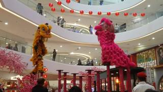 acrobatic lion dance performance at quill city mall cny 2017 launching