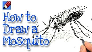 How to Draw a Mosquito Real Easy