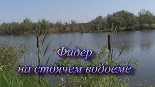 Фидер на стоячем водоеме