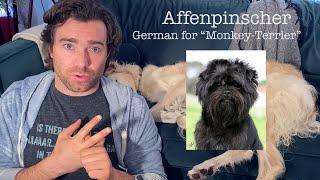 Episode 1  Origins of Doggos  Affenpinscher