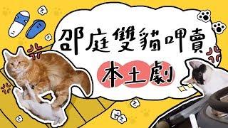 全台手播【庭閃der】#5 邵庭雙貓  呷賣  本土劇