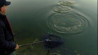 Рыбалка.Поймали монстра на 29:37минуте.Побили все рекорды.Рыбалка на карпа и амура
