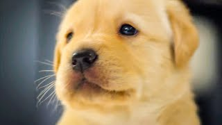 Puppy Opens Eyes For The First Time | The Secret Life of Dogs| BBC Earth Kids