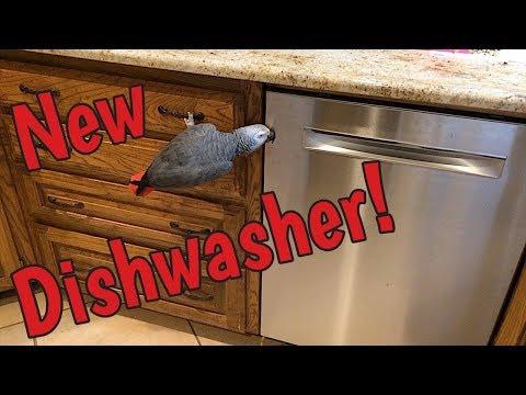 Einstein Parrot inspects the new dishwasher