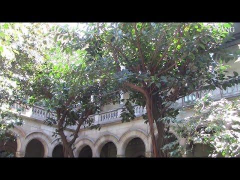 Los jardines de la Universitat de Barcelona