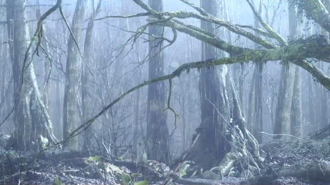 Dark Souls 2 Cursed Trailer: Dark Souls 2 Cursed Trailer