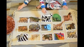 Learning Animals for Toddlers and Preschoolers|Animal Skin Covers