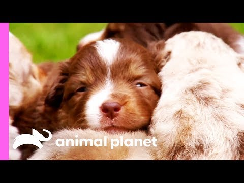 Top 3 Cutest Puppy Moments | Too Cute!