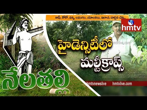 Most Amazing Fruits & Vegetables Farming Techniques By Ideal Farmer Haribabu | Nela Talli | hmtv