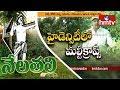 Most Amazing Fruits & Vegetables Farming Techniques By Ideal Farmer Haribabu | Nela Talli | hmtv