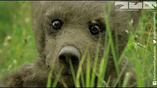 Robotic Spy Bear Goes Fishing With Real Grizzlies. Will He Survive?