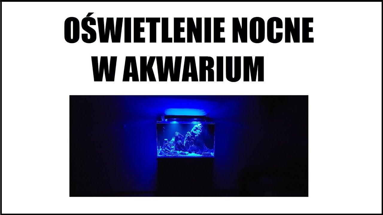 Nocne Oświetlenie W Akwarium Konieczność Czy Gadżet