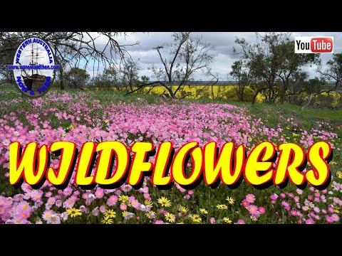 The Wildflowers Of Western Australia