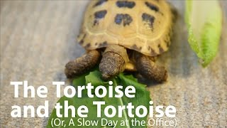 Office Tortoise Race!