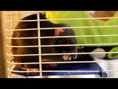 My young rats - Prentiss, Reid and Garcia