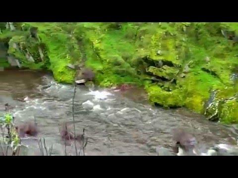 Hunting in Spain/Caza España/Jabali/Lance/Santa Barbera/7mm/Monteria/Extremadura