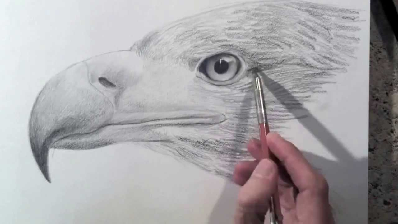 How to draw a realistic eagle head drawing textures kinoglobus net ua youtube