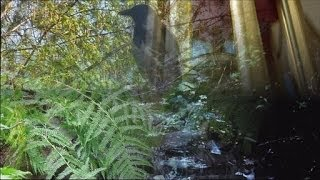 ❀ Sound Therapy ~ 5 hours wind chimes, birds song, forest stream