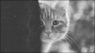 Монро - Кошке хочется