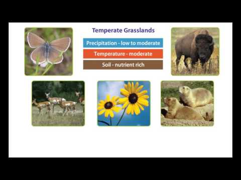 Earth's Climate - The Temperate Zone