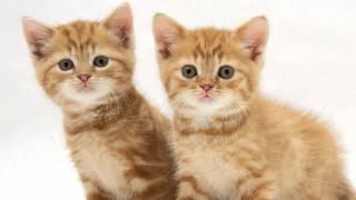 Два кота - клип