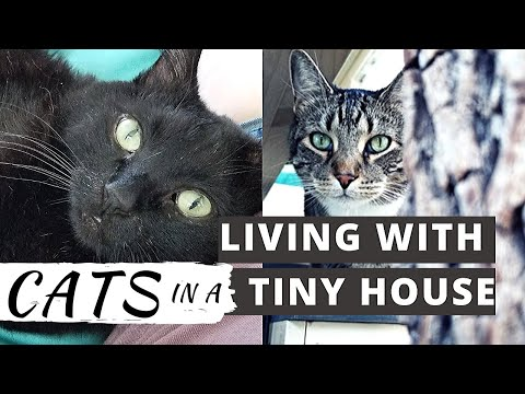 Living With Cats in a Tiny House