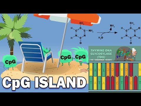 CpG ISLANDS - Promoters, Link to Cancer, X-Chromosome Inactivation